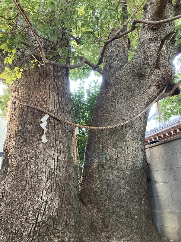二股 縁むすびくすの木